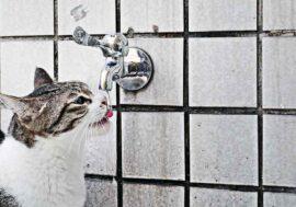 Migliori fontanelle per gatti