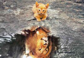 Il gatto e l'acqua: le cose da sapere di questo rapporto d'amore e odio