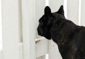 Migliori cancelli e recinti per cane da interno