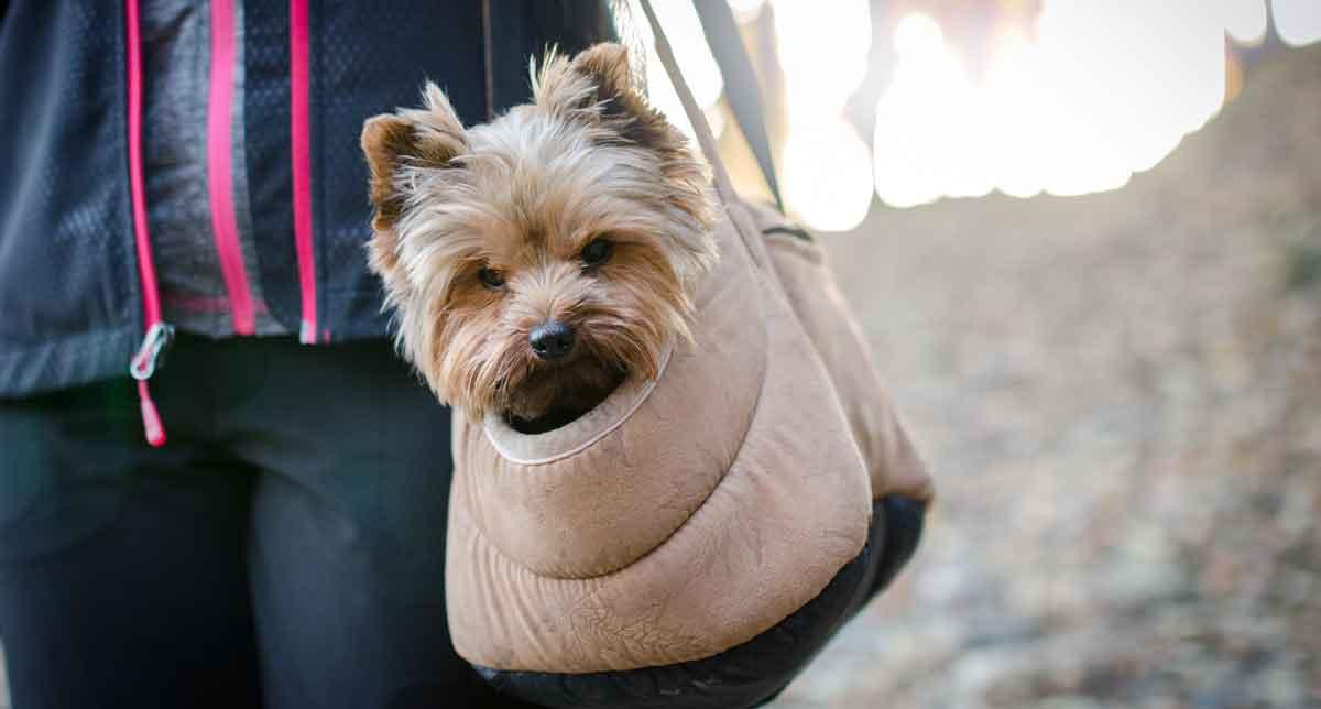 Migliori trasportini e borse porta cane
