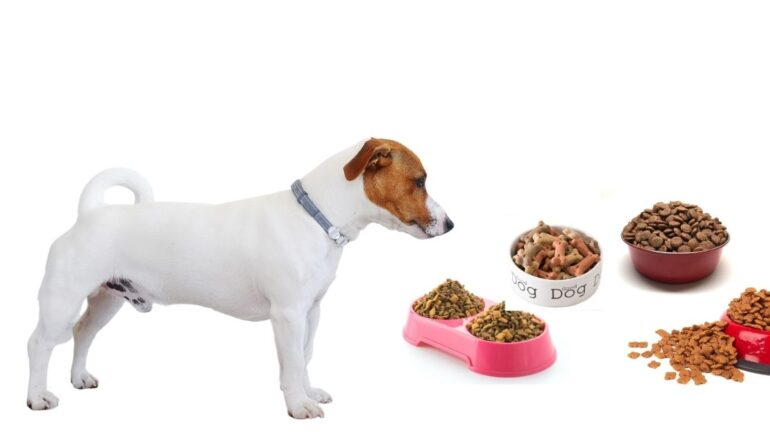 Ciotole per cani: quale scegliere? Una guida ragionata