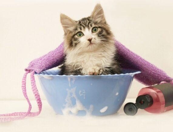 Come fare il bagno al gatto: tutto ciò che devi sapere