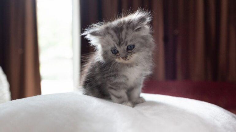 Portare a casa un gatto: come prepararsi