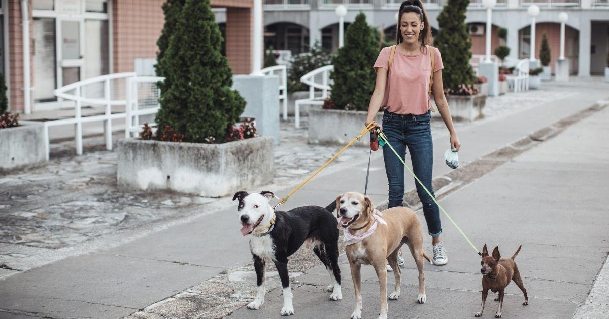 Come scegliere il perfetto dog-sitter