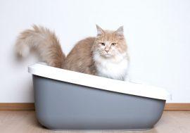 Le migliori lettiere autopulenti per gatti