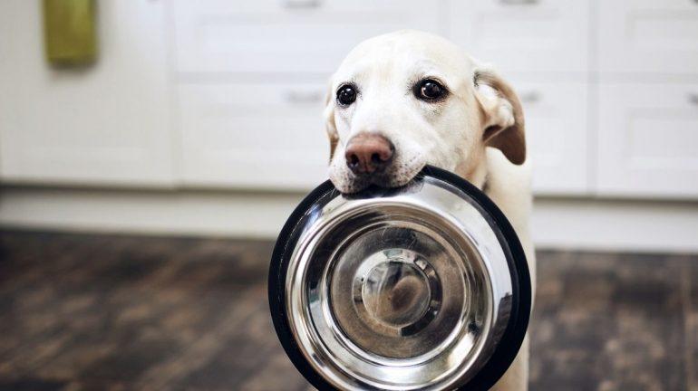 Pasti del cane: la corretta gestione dell'alimentazione