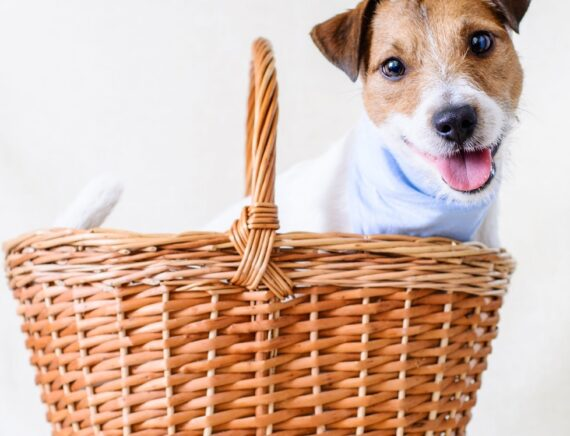 Portare a casa il tuo nuovo cane: preparazione e primi passi