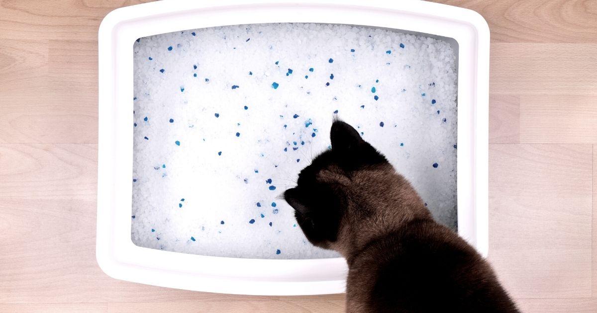 Come scegliere la sabbia per la lettiera dei gatti?