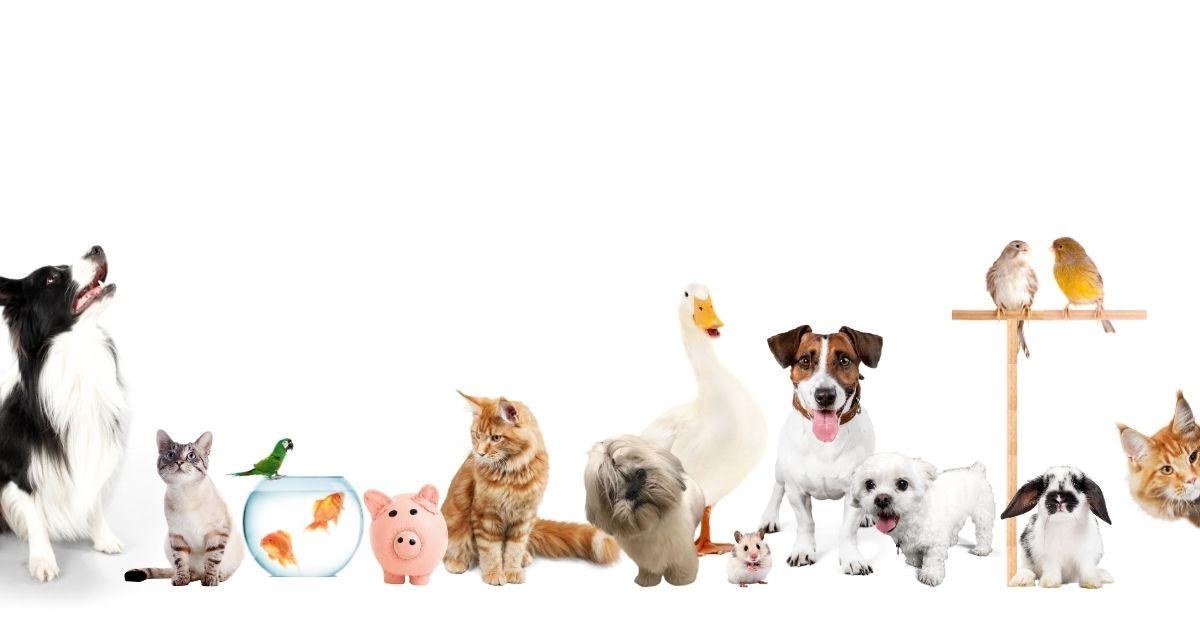 Come scegliere un animale domestico