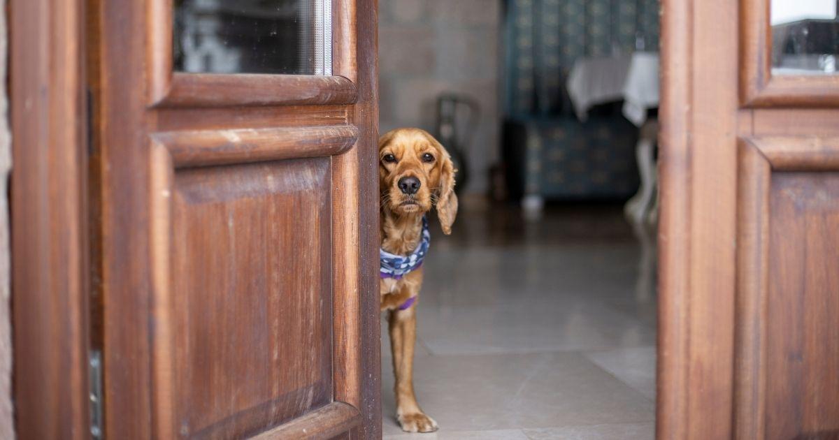 Come gestire l'ansia da separazione dei cuccioli
