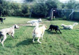 Anche i cani vanno all'asilo per cani: l'importanza della socializzazione