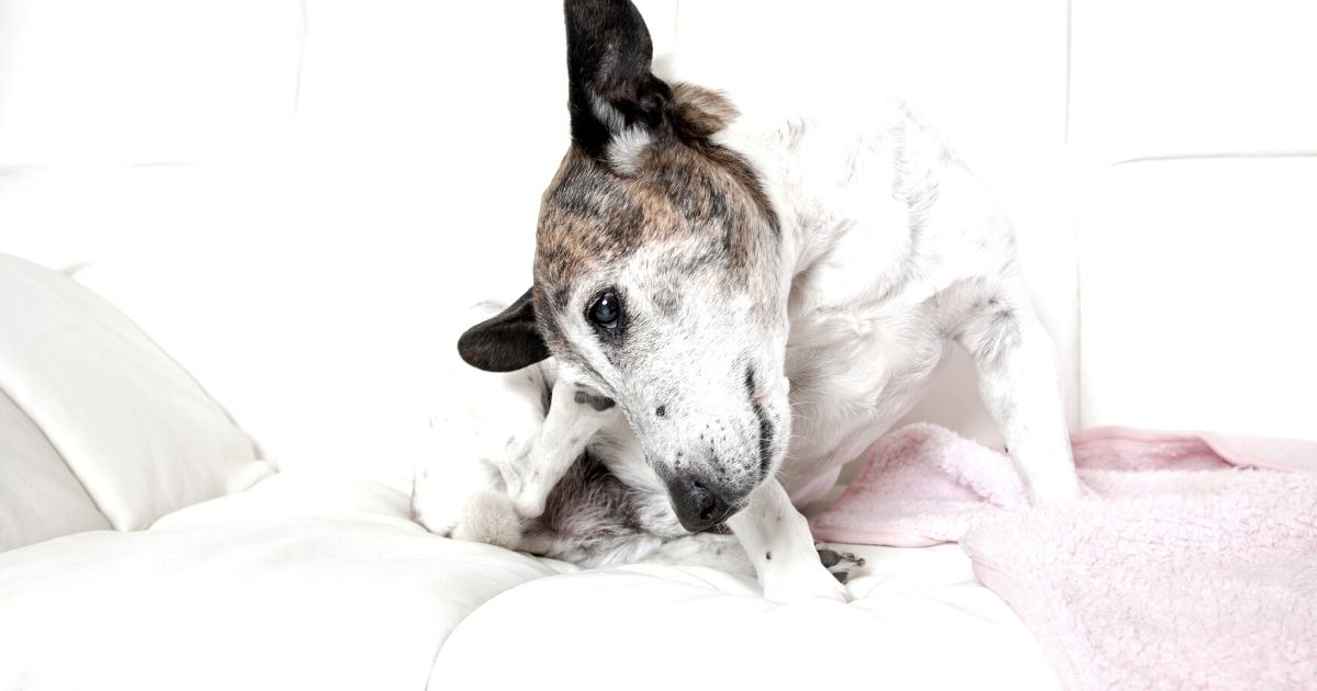 Dermatite cane: come prevenirla ed affrontarla