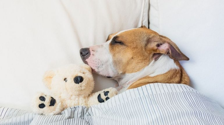 La posizione della cuccia del cane: dove dovrebbe dormire?
