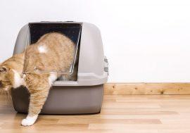 Dove mettere la lettiera per gatti